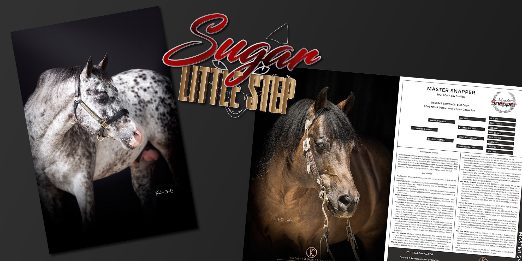 Promote your stallion